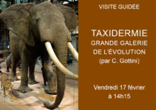Visite atelier taxidermie