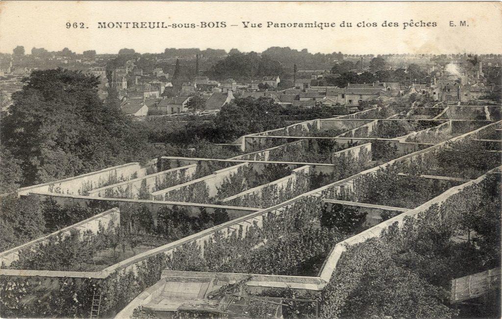 Murs à peches montreuil